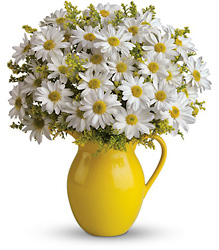 Sunny Day Pitcher of Daisies from Mona's Floral Creations, local florist in Tampa, FL