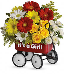 Baby's Wow Wagon - Girl from Mona's Floral Creations, local florist in Tampa, FL