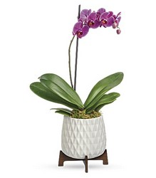 Architectural Orchid Plant from Mona's Floral Creations, local florist in Tampa, FL